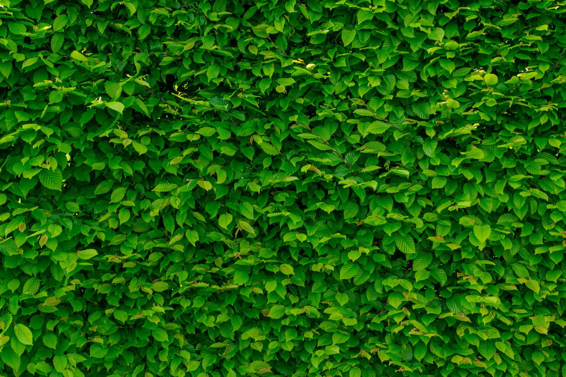 Forbedr akustikken på dit kontor med en plantevæg