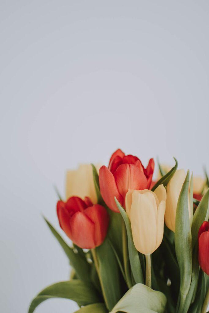 Brug dit vægdrivhus til blomster og andre planter